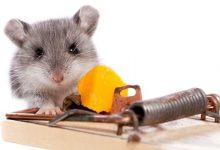 تصویر بهترین راه برای مبارزه با موش، راهنمای خرید انواع تله موش