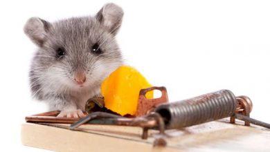 بهترین راه برای مبارزه با موش، راهنمای خرید تله موش