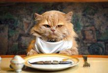 تصویر معرفی و خرید ۳۰ نمونه غذای گربه خشک و کنسرو شده، سالم و بهداشتی + قیمت روز
