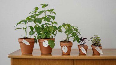 تصویر معرفی و خرید ۱۸ نمونه گلدان زیبا و مقاوم برای گل های آپارتمانی+ قیمت روز